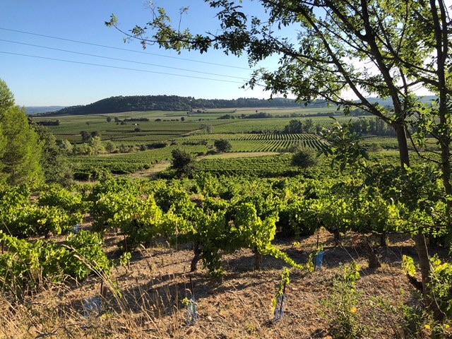 Vigne valliere